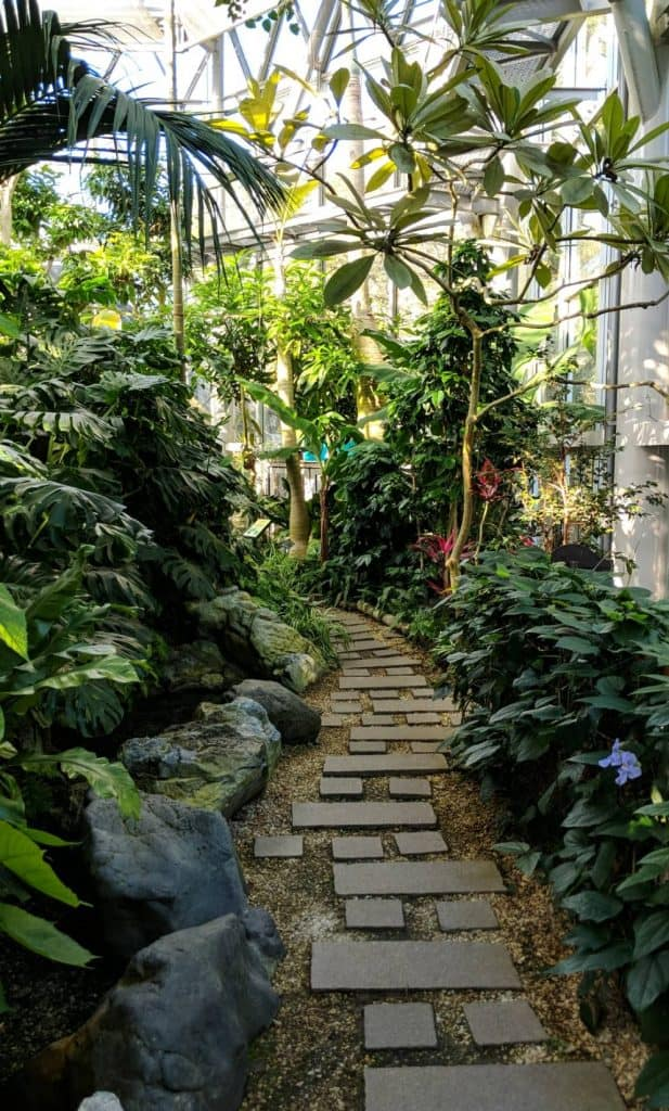 Path in Glasshouse