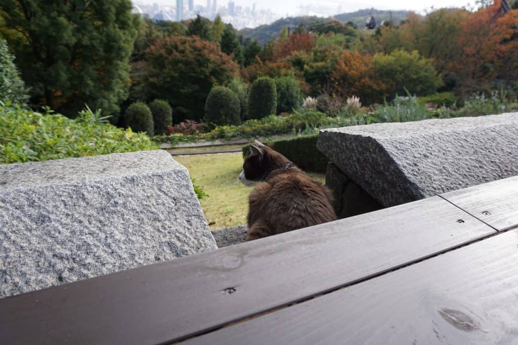 Cat at Nunobiki Herb Garden