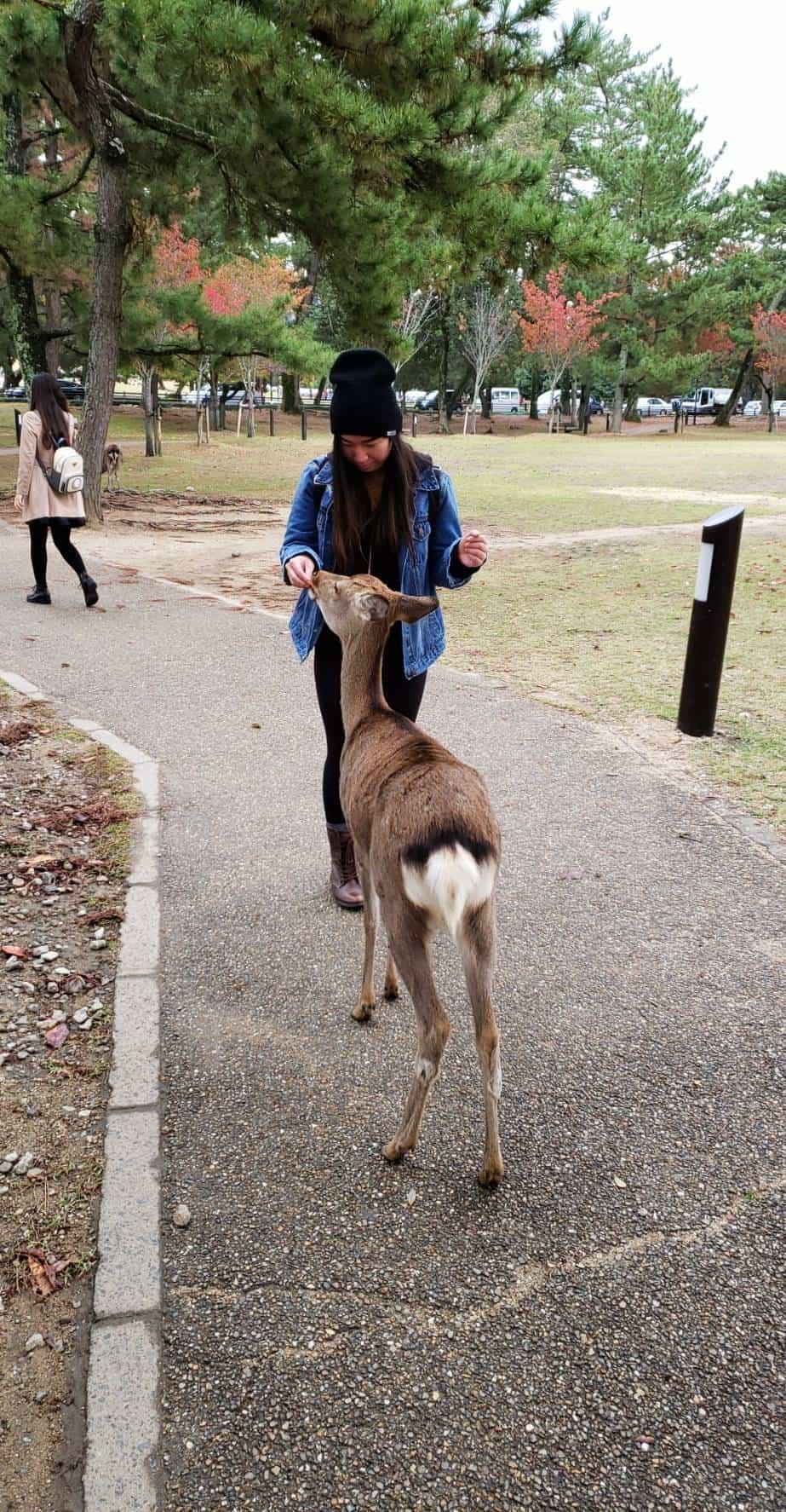 Ann feeding Nara deer