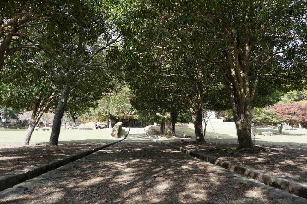 Nara Araike Park path