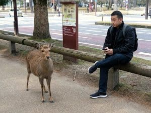 Nara Itinerary: Half-Day Tour